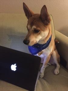Doge Write